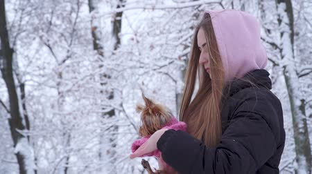 yorkie : Portrait cute young girl with long hair covered with a hood holding a yorkshire terrier dressed in wool sweater on hands in a winter snow-covered park. Teenager and a dog on a walk outdoors. Stock Footage