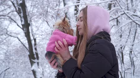 yorkie : Portrait cute young girl with long hair kissing a yorkshire terrier dressed in wool sweater holding dog on hands in a winter snow-covered park. Teenager and a dog on a walk outdoors. Slow motion.