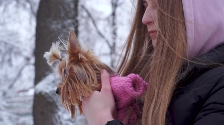 yorkie : Portrait teen girl with long hair covered with a hood hugging a yorkshire terrier dressed in wool sweater holding dog on hands in a winter snow-covered park. Teenager and a dog on a walk outdoors.