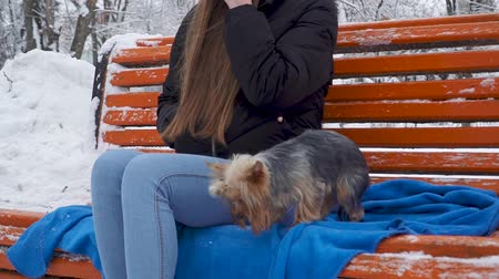 animal paws : Young girl with long hair covered with a hood smoking on bench in a winter snow-covered park. Teenager and a yorkie resting outdoors together. Closeup. Slow motion. Stock Footage