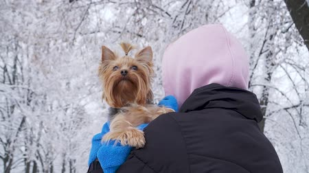 yorkie : Woman stands with her back to camera, holding small yorkshire terrier covered in towel. Teenager and a dog on a walk outdoors.