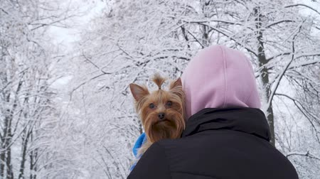 yorkie : Woman stands with her back to camera with head covered a hood holding small yorkshire terrier wrapped in a blue blanket on hands. A teenager and a dog on a walk outdoors. Slow motion.