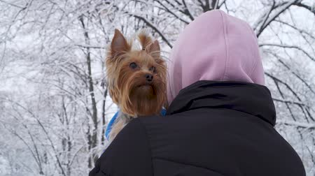 yorkie : Woman stands with her back to camera with head covered a hood holding small yorkshire terrier wrapped in a blanket on hands. Teenager and a dog on a walk in a winter snow-covered park. Slow motion. Stock Footage