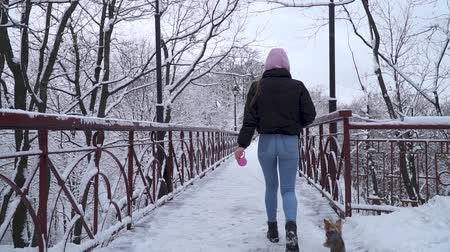 yorkie : Woman walks on bridge with her dog on leash. Small yorkshire terrier runs near owner on snow. Slow motion.