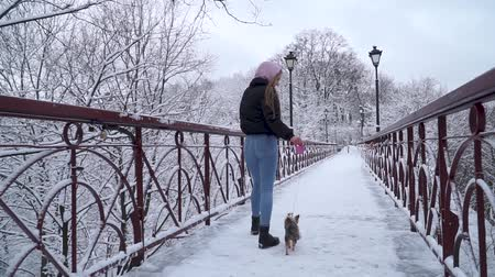 yorkie : Woman walks on bridge with little dog. Small yorkshire terrier on leash runs near owner in a winter snow-covered park. Slow motion.