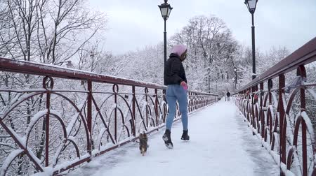 yorkie : Yorkie walk on leash with owner on the bridge. Small yorkshire terrier running with girl in a winter snow-covered park. Slow motion. Stock Footage