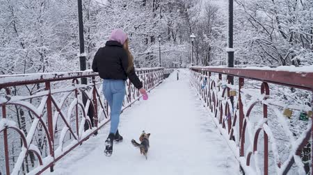 yorkie : Small yorkie walk on leash with owner on the bridge. Yorkshire terrier running with girl in a winter snow-covered park. Slow motion. Stock Footage