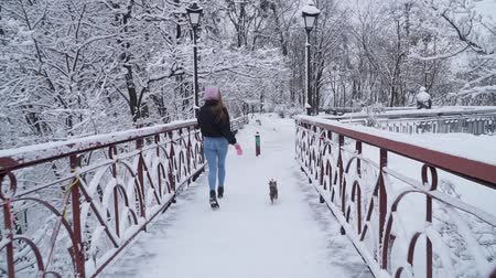 terier : Funny yorkie walk on leash with owner on the bridge. Small yorkshire terrier running with girl in a winter snow-covered park. Slow motion.