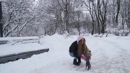 itaat : Young woman takes small yorkshire terrier on hands, walking in the winter park