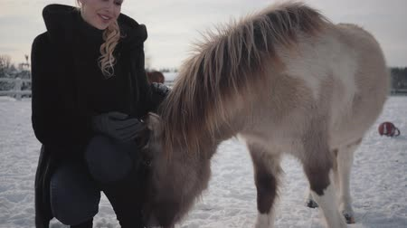 пони : Young beautiful woman strokes muzzle adorable small pony at a ranch close up. Girl in warm clothing spends time with horse in the winter paddock. Concept of horse breeding