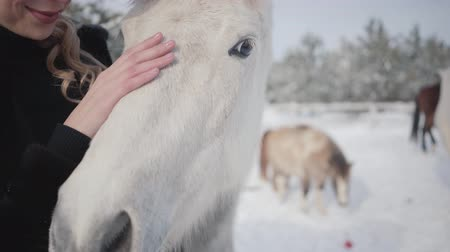 tame animal : Cute young happy girl strokes a beautiful white horse on a country ranch. Horses walk outdoors in the winter.