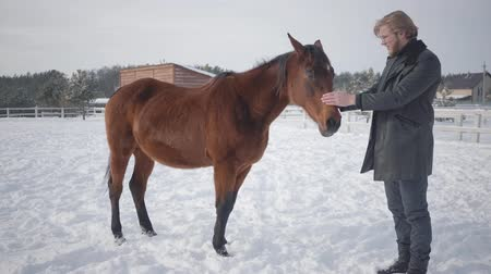 パドック : Tall bearded man strokes adorable brown thoroughbred horse standing near animal in winter ranch. Concept of horse breeding. Camera moves closer