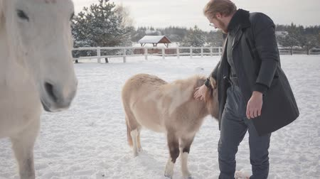 equitação : Handsome bearded guy in glasses wearing a coat stroking horses and pony on a country ranch. Horses walk outdoors in winter.