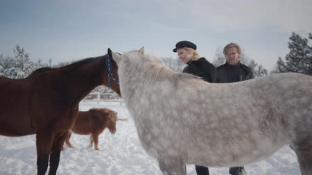 horse breeding : Couple walks with horses and ponies outdoors on a ranch in winter. A guy and a girl stroking horses.