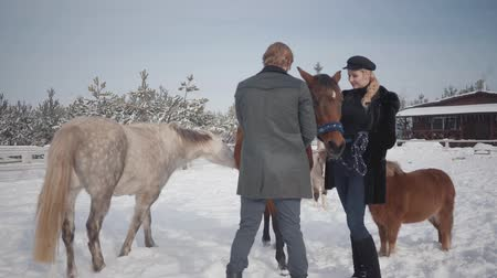 equitação : Couple walks with horses and ponies outdoors on a ranch in winter. A guy and a girl stroking horses.
