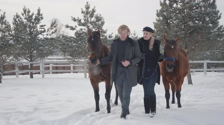 dizgin : Blond woman and man leading two brown horses talking at the snow winter ranch. Young family of horse lovers. Happy positive couple spend time outdoors at farm. Concept of horse breeding