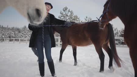 dizgin : Blond woman and tall man leading two brown horses at the snow winter ranch. One stubborn animal stopped and wants to go further, but girl makes it walk. Happy couple spend time outdoors at farm