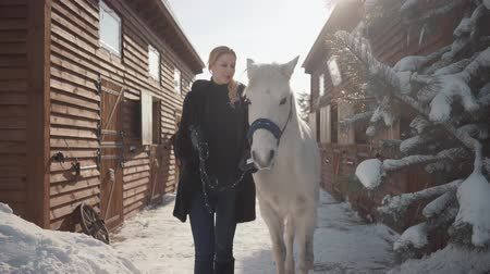 koń : Pretty blonde walks with a beautiful white horse leading her holding a stirrup over a snow-covered country ranch.