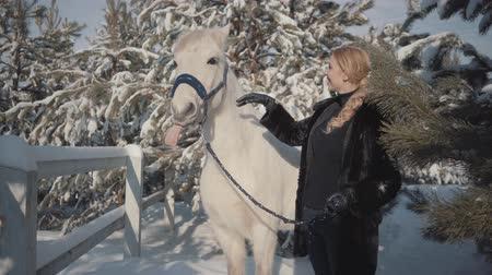 чистокровный : Portrait cute blond girl with thoroughbred white horse near the fence. Young woman playing with her white horse outdoors. Concept of horse breeding