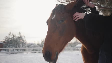 ranč : Beautiful girl touching the mane of a beautiful horse and strokes her muzzle on a ranch in winter. Slow motion.