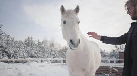 horse breeding : A bearded guy with glasses strokes a beautiful white horse on a ranch in the winter season. Slow motion.