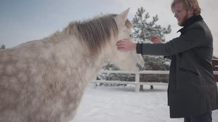 égua : Bearded man playing with beautiful white dappled horse at winter ranch. Animal trying to eat coat of human. Happy positive farmer spends time outdoors at farm. Concept of horse breeding