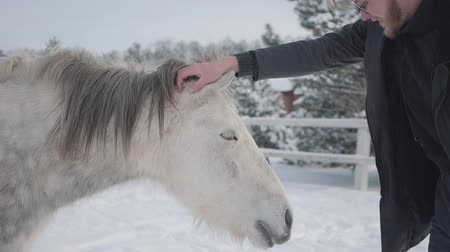 padok : A bearded guy with glasses strokes a beautiful white horse on a country ranch in the winter season. Slow motion. Stok Video