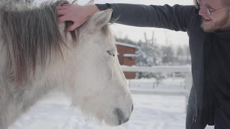 equitação : A bearded guy with glasses strokes a beautiful white horse on a country ranch in the winter season. Slow motion. Vídeos