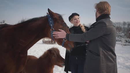 staffa : The guy and the girl stroke adorable horse on a country ranch in the winter season. A young couple walks outdoors on a farm with horses. Pony pesters the girl. Slow motion.