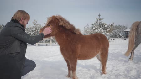 пони : Man strokes muzzle adorable small pony at a ranch close up. Concept of horse breeding. Slow motion.