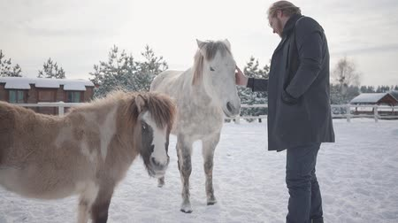 horse breeding : Handsome bearded guy with glasses strokes a beautiful white horse on a ranch in the winter season. Slow motion.
