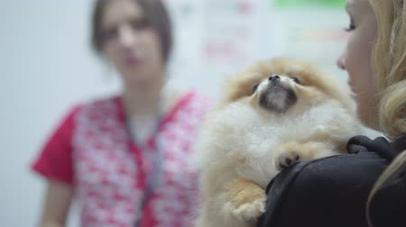愛撫 : Blond woman holding small dog in the veterinary clinic close up. Animal treatment concept