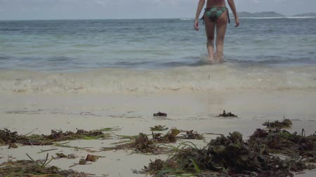 блаженство : Seychelles. Praslin Island. Back view of the young woman in swimsuit going into clear blue water. Algae lie on the sand by the sea. Tourism, vacation, traveling concept. Leisure on the beach.