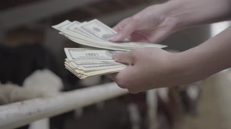 ふくらはぎ : Female workers hands counting money on the cow farm in front of stall with cows. Positive farmer gets income from his farm. Agriculture industry, farming and animal husbandry concept