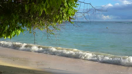 seychely : Seychelles. Praslin Island. Beautiful view of the sandy beach, the ocean and rolling waves. Exotic trees grow along the coast of a tropical island.