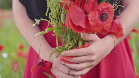 klaprozen : Unrecognized female hands holding bouquet of flowers in a poppy field. Connection with nature. Green and red harmony. Leisure in nature. Blossoming poppies.