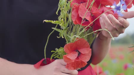 vlčí máky : Unrecognized woman holding bouquet of flowers in a poppy field. Connection with nature. Green and red harmony. Leisure in nature. Blossoming poppies.