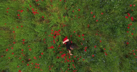 vlčí máky : Top view. Pretty young woman wearing headphones listening to music and dancing in a poppy field smiling happily. Connection with nature. Leisure in nature. Blossoming poppies. Freedom. Drone shooting.