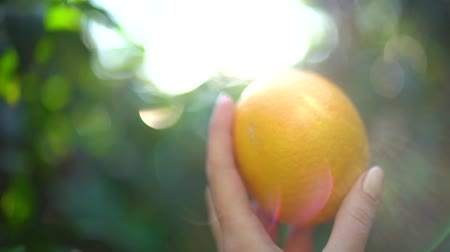 alimentos naturales : Close-up of female hand holding a juicy tangerine or orange on the background of sunny glare and green bloor on a sunny day. Slow motion.
