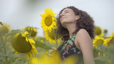 scented : Pretty curly playful smiling girl standing on the sunflower field. Bright yellow color. Freedom concept. Happy woman outdoors
