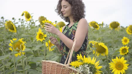 proutěný : Beautiful curly girl walking and picking flowers in the big wicker basket in the sunflower field. Connection with nature. Rural life