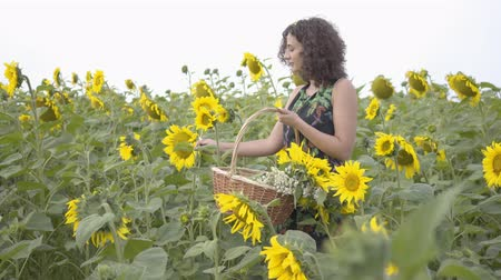 привлекать : Adorable slim girl walking and picking flowers in the big wicker basket in the sunflower field. Connection with nature. Bright yellow color. Happy woman outdoors. Rural life