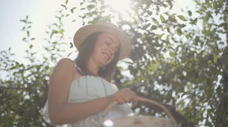 osier : Attractive young positive woman in straw hat and white dress picking apples and putting in the wicker basket in the green garden. Harvest time, rural lifestyle. Bottom view. Slow motion Vidéos Libres De Droits