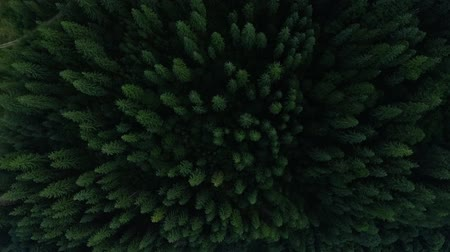 decomposition : Top view of deep green pine forest and flowing river. The beauty of wild nature. Peaceful nature. Traveling, tourism, vacation. Drone shooting, top view