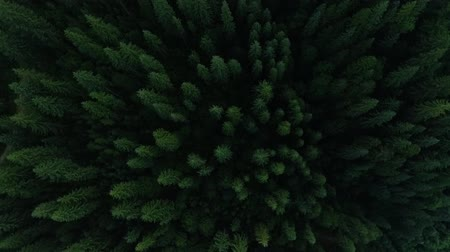 decomposition : Aerial view of deep green pine forest and flowing river. The beauty of wild nature. Peaceful nature. Traveling, tourism, vacation. Drone shooting, top view