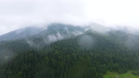 decomposition : Aerial view of deep green pine forest near mountains in the clouds and small village near. The beauty of wild nature. Peaceful nature. Traveling, tourism, vacation. Drone shooting, top view Stock Footage