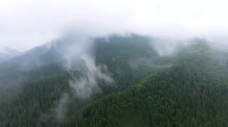 decomposition : Top view of deep green pine forest near mountains in the clouds and small village near. The beauty of wild nature. Peaceful nature. Traveling, tourism, vacation. Drone shooting, top view Stock Footage