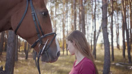 騎乗位 : Close-up portrait of a young Caucasian woman caressing horse in the autumn forest and talking. Smiling brunette equestrian resting outdoors with her lovely pet. 動画素材