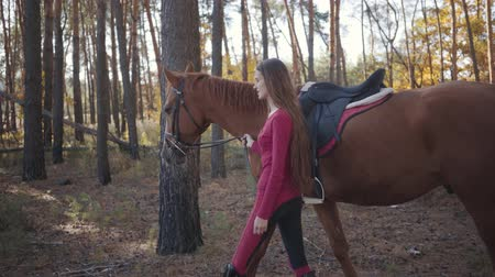 жеребец : Side view of a young Caucasian girl in pink clothes walking with beautiful brown horse between trees in the autumn forest. Pretty female equestrian resting with her pet outdoors. Стоковые видеозаписи