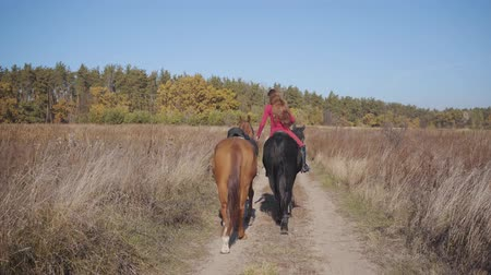 terbiye : Back view of a Caucasian female equestrian riding the black graceful horse on the dirt road and holding halter of the brown stallion. Professional jockey in pink clothes spending autumn day outdoors. Stok Video
